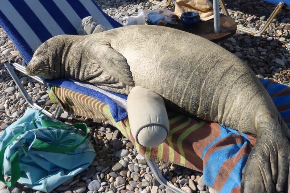 tuleň středomořský Argyros