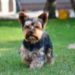 5 plemen psů, která téměř nelínají