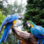 Končí sezóna. Jak se v zoo mění otevírací doby?
