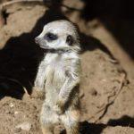 10 zvířecích mláďat, která jste možná nikdy neviděli
