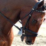 Nechme koně dýchat a povolme mu nánosník