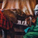VIDEO: Starat se jako o vlastní dítě. Keňští muži vychovávají sloní sirotky