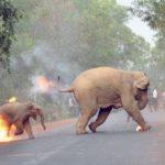 Vyděšení sloni utíkající před ohněm a davem