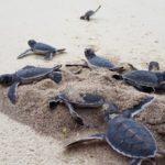 Pomozte zachránit mořské želvy. Hrozí jim vyhynutí