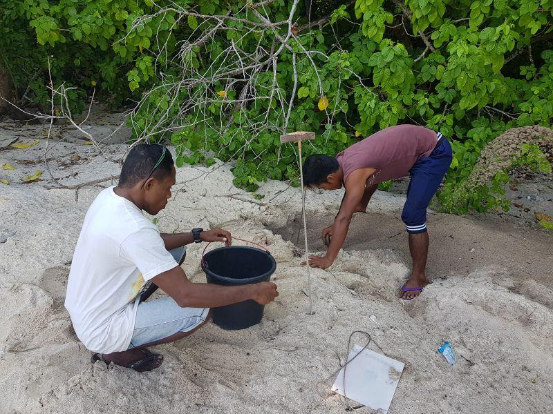 záchranáři mořských želv
