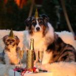 5 rad, jak udržet psa o Silvestra v klidu