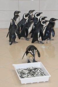 tučňáci brýloví v Zoo Ústí nad Labem