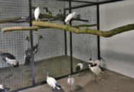 zoo dvorec požár a obnova zimoviště