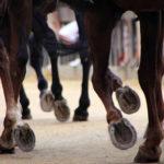 Musí kůň nosit podkovy?