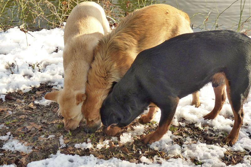 psi jedí hovínka