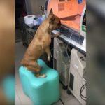 VIDEO: Štěňata v inkubátoru. Fena je nespoustila z očí