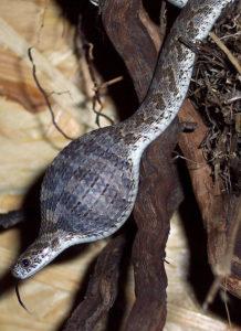 had snědl vejce