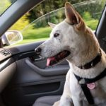 Co dělat, když najdu přehřátého psa v autě?