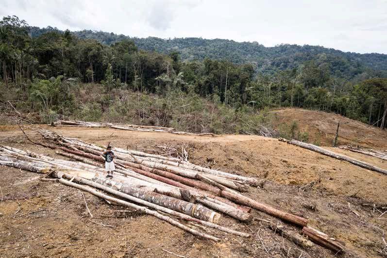 Indonésie apokalypsa orangutan tapanulijský