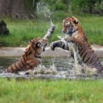 Co je enrichment aneb jak zvířatům zpříjemnit život v zoo