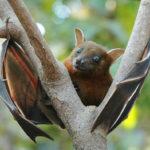 Kaloň není netopýr. Čím se liší?