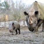 Novinky ze zoo: prosincový baby boom