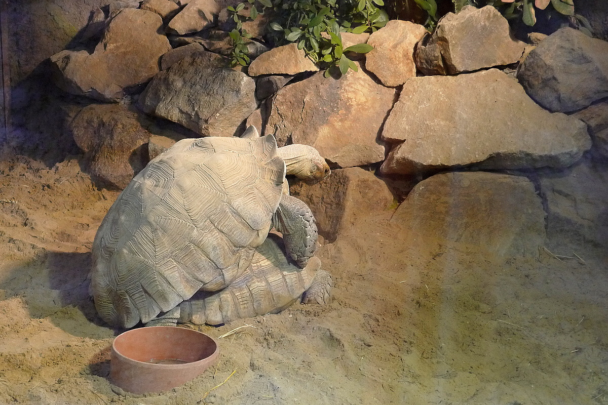 želva ostruhatá Zoo Ostrava
