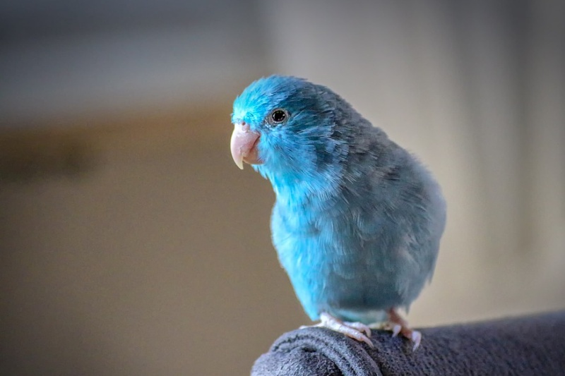 papoušci papoušek