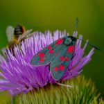 hmyz motýl včela