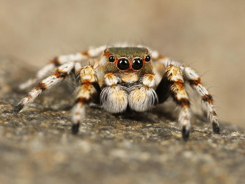 hmyz pavouk