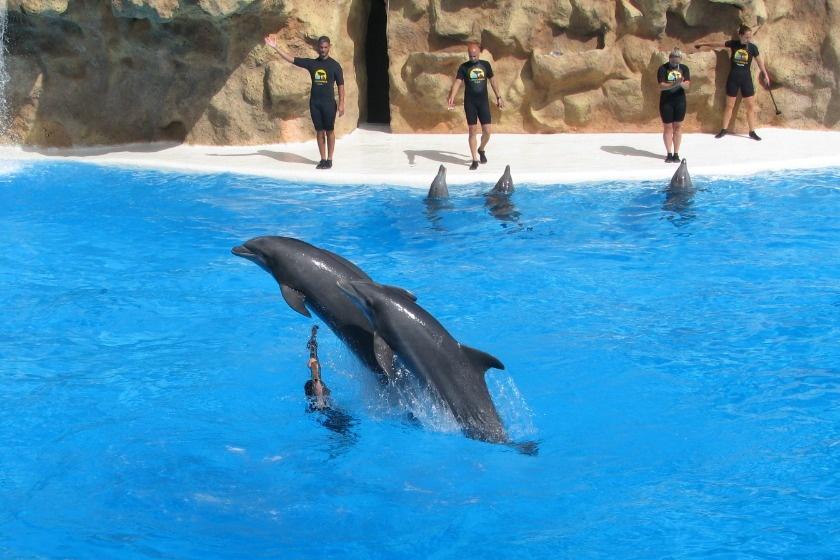 delfín Loro Parque