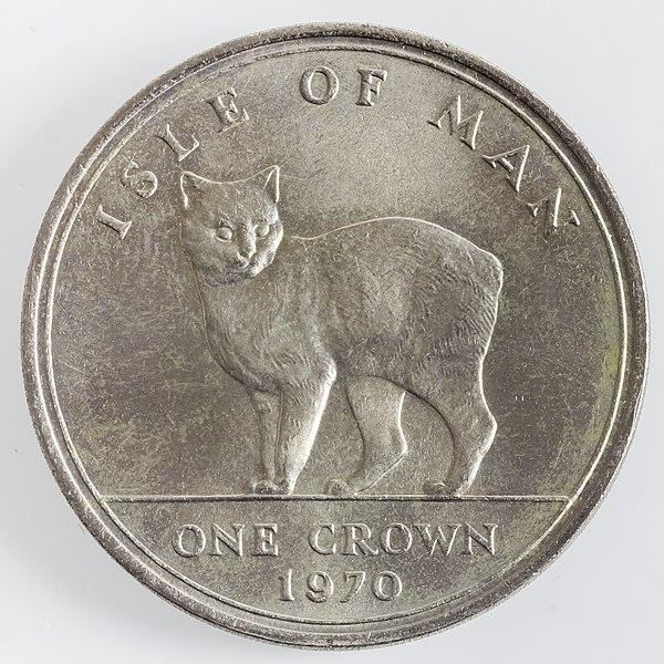 mince manská kočka manx