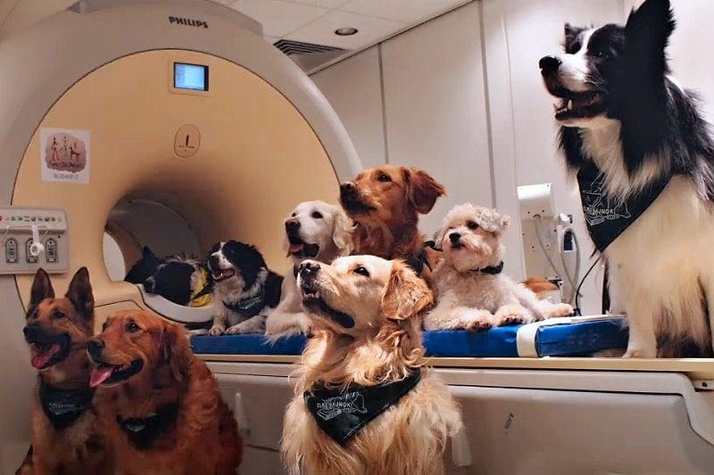psi rozumí lidské řeči